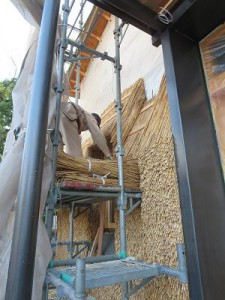 本堂外壁をヨシで葺く竹田さん